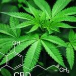 Le cannabis est-il un futur traitement pour la fibromyalgie?
