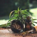 Fleurs de CBD: des élixirs santé au naturel